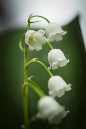Lily 5965.jpg
