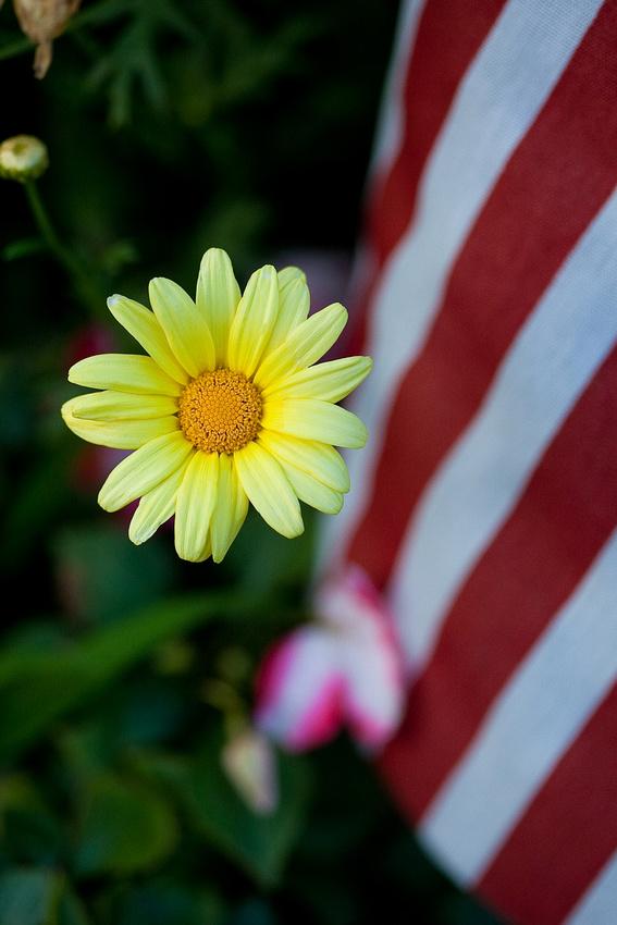 Daisy Flag_014